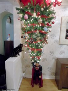 Cat Proof Christmas Tree.How To Cat Proof Your Christmas Tree Woodland Veterinary