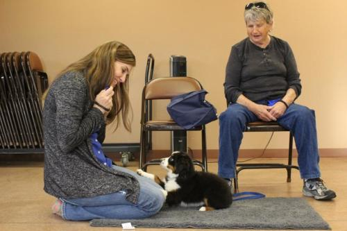 Puppy training classes and private lessons
