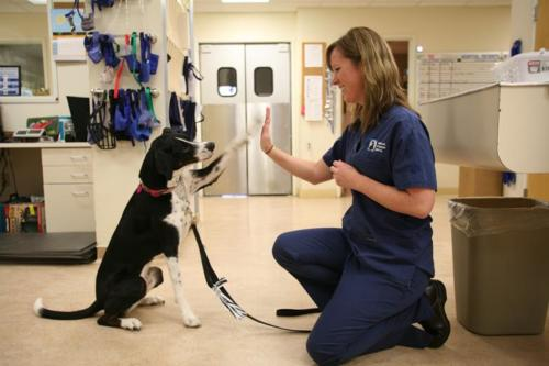 Making the vet fun!